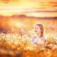 Закат на ромашковом поле :: Александра Гилета