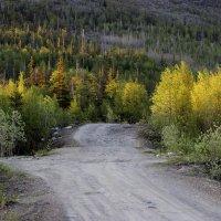 Дорога в лес :: Виктория Браун