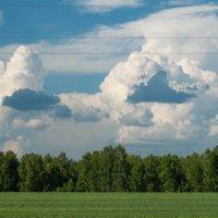 Кучевые облака :: Evgenija Enot
