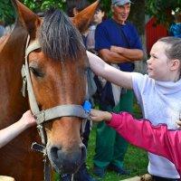 Добрый коняшка. :: Sergey Serebrykov