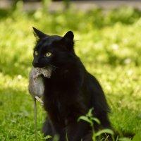 Черный кот с добычей :: Olcen - Ольга Лён