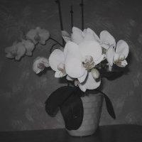 Моя орхидея :: Галина Бобкина