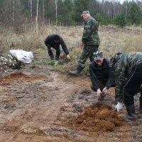 Крутые Кирсинские мужики саят в лесных делянках садовые культуы.. :: Александр Широнин
