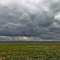 Казахстанский дождь :: Николай Сапегин