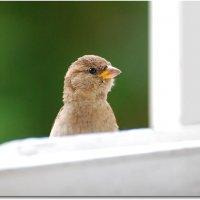 жду приглашения! :: linnud