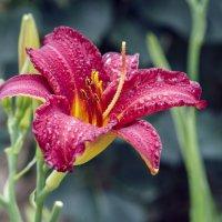 Цветок :: Андрей Пашко