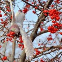 Осенний сбор ягоды :: юрий Амосов