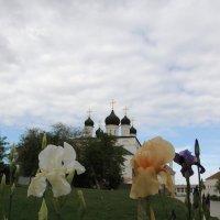 АК 2 :: Евгения Чередниченко