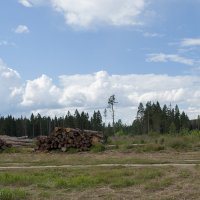 Совсем недавно здесь шумел лес. :: Елена Попова