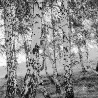 Черно- белое :: Евгения