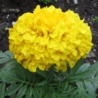 Жёлтый цветок :: Дмитрий Никитин