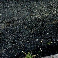 Камни, трава и асфальт :: Николай Филоненко