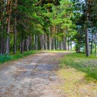 тропа в лесные гущи :: Света Кондрашова