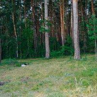 Ордынский лес :: Света Кондрашова