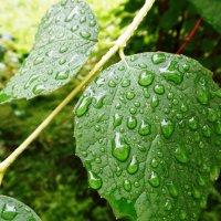 Многоточие дождя... :: Марина Харченкова