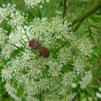 из жизни насекомых... :: Galina Leskova
