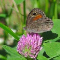 Бабочка на цветке :: Александр Смирнов