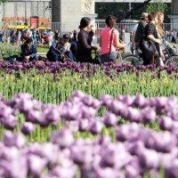 цветы как люди или люди как цветы :: Олег Лукьянов