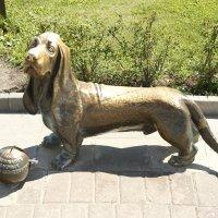 Памятник собаке в центре Костромы :: esadesign Егерев