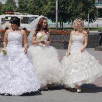 Ищем женихов... :: Наталия Григорьева
