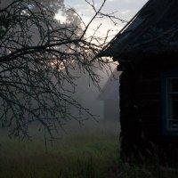 Заброшенный сад :: Alexander Petrukhin