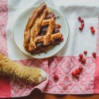 Котэк тоже любит сладкое :: Hanna Prakapovich