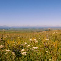 Разноцветье Карачаево-Черкессии :: ФотоЛюбка *