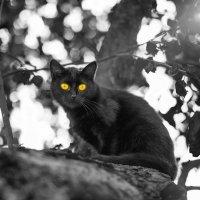 учёный кот... :: Лилия .