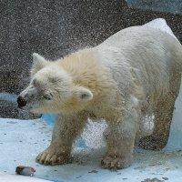 Тот самый медвежонок :: cfysx