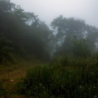 Туманная дорога :: Нина Борисова