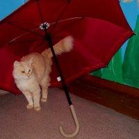 что мне дождь... :: Надежда Климова