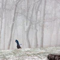 Мартовский снегопад :: Владимир Дядьков