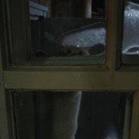 хозяева! впустите пожалуйста! здесь уже холодно! :: Александр Иванов