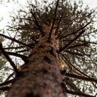 Когда деревья были большими :: Елена Яшнева