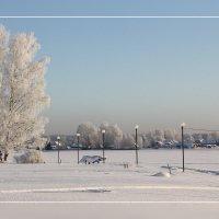 Зима... :: Александр Широнин