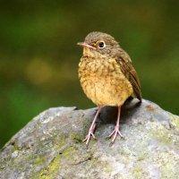 Птаха на камечке :: Alexander