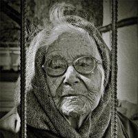 Прожить больше века :: Николай Белавин