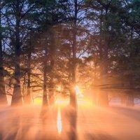 в сказочном лесу :: Алексей Яковлев