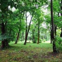 Зеленоградск, уголок городского парка :: Маргарита Батырева