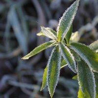 Plant :: Елизавета Бородина