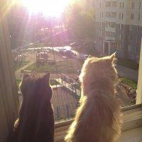 взгляд из окна :: Ольга