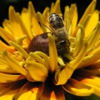 Пчелка :: Виталий Комаров
