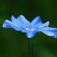 На блюдечке с голубой каёмочкой :: Swetlana V