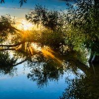 Первые лучики солнца :: Наталия Горюнова