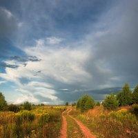 Лето - это маленькая жизнь... :: Владимир Комышев