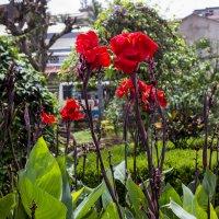 Цветы Индии :: Александр Бычков
