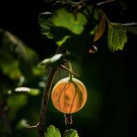 Сладкий,спелый и очень вкусный.... :: Lidija Abeltinja