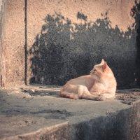 разбудили... :: Тася Тыжфотографиня