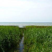 Тихие заводи Плещеевого  озера :: Galina Leskova
