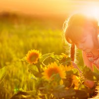 золото полей :: Катерина Терновая